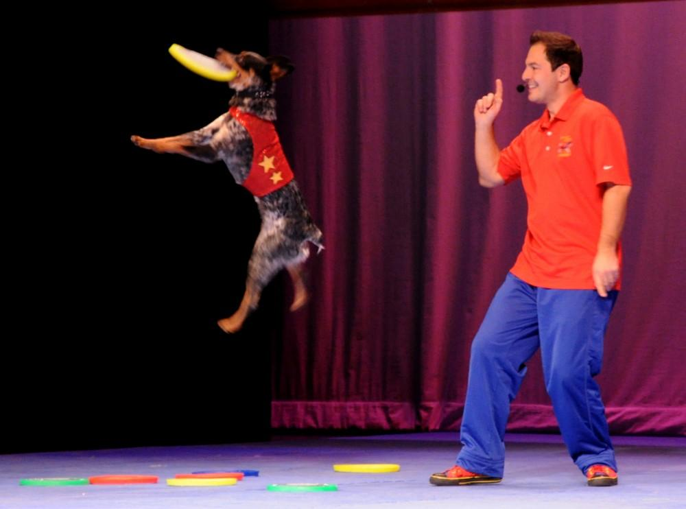 Adopted dogs from pounds across the nation do flips and tricks, such as Cooper the Australian cattle dog who can catch frisbees tossed by Chris Perondi in quick succession up to four feet off the ground.