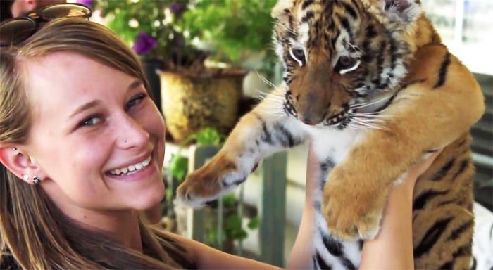 Baby taliger at Kirshner Wildlife Foundation