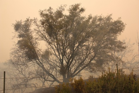 A burned tree with a background of the smoke-filled sky. Photo credit: Allisun Coote