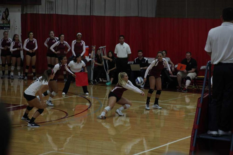 The Chico State Wildcats beat the San Francisco Gators in five sets on Sept. 22.. Photo credit: John Domogma