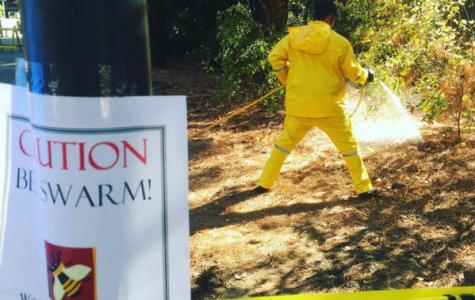 Meat bees attack Plumas Hall bridge