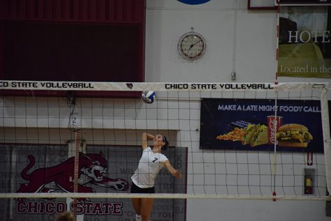 Chico State junior defensive specialist Shannon Cotton serves the ball during a home game. Photo credit: Royal T Lee-Castine