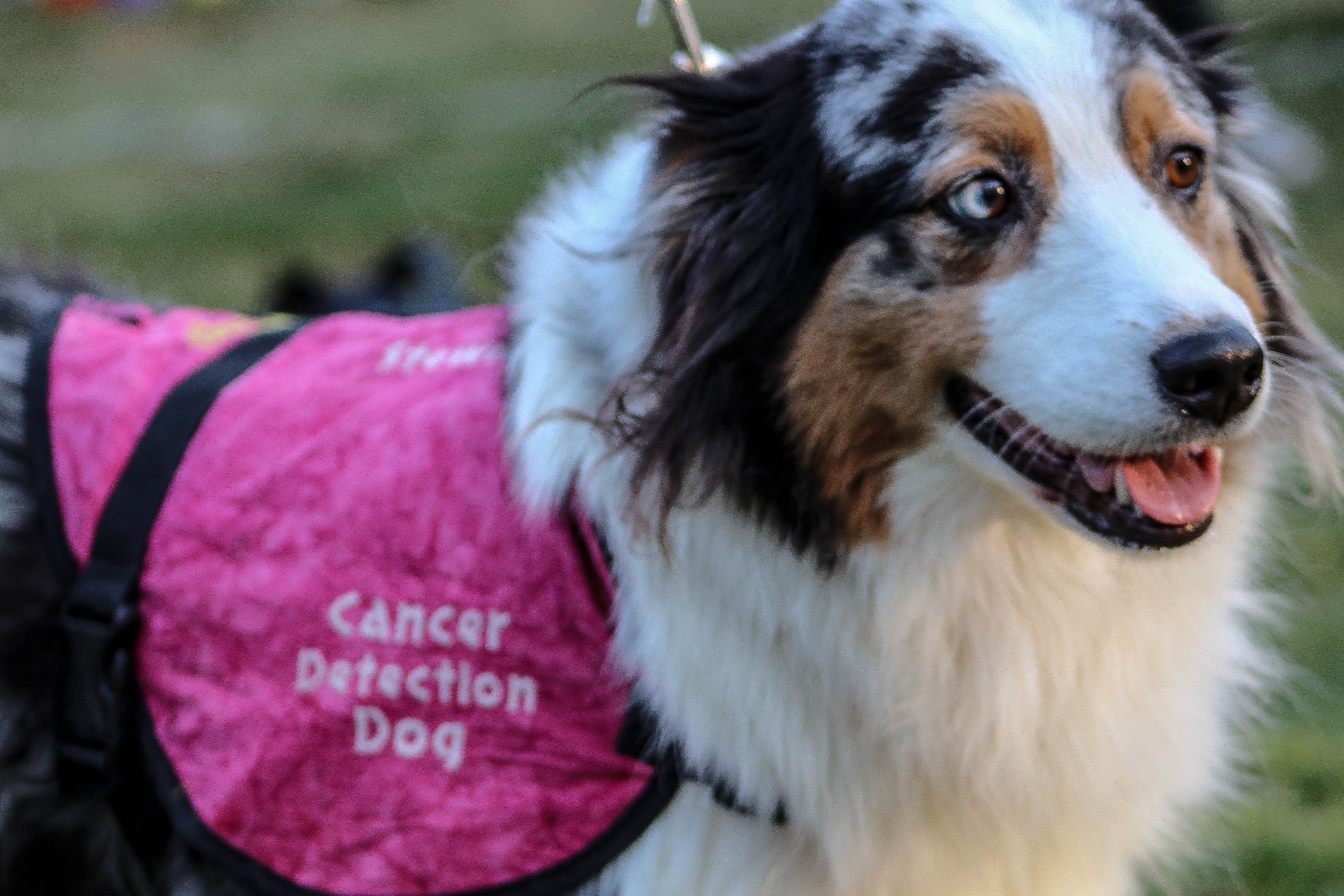 Pooches Walk, Woof and Wag for a cause