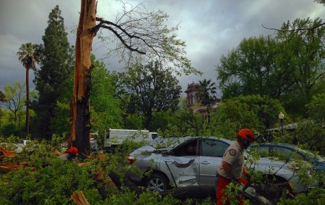 Lightning splits Bidwell Mansion tree
