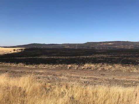 Burned fields