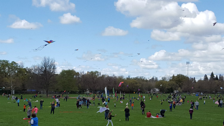 Families come together to enjoy a beautiful day in the park.