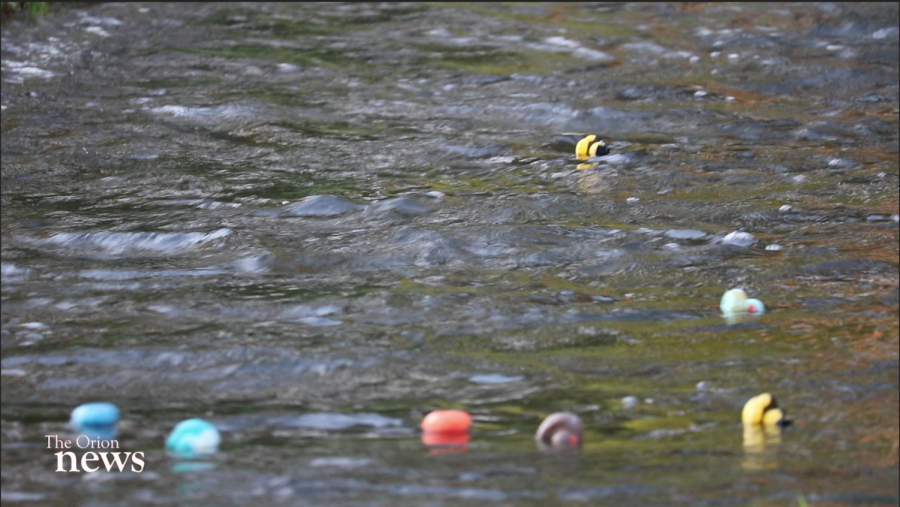Ducks floating down the creek in one of many races of the day. Photo credit: Christian Solis
