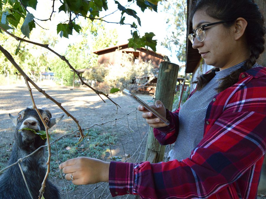 Aryanna Guitron feeds leaves to a friendly goat at TJ Farms Estates. Guitron went with friends from the group Christian Challenge to pick out a pumpkin for Halloween. Photo credit: Olyvia Simpson