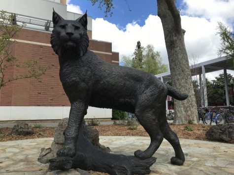 April marks a year since the welcome of Wildcat Will at Chico State but is it really worth it? Photo credit: Janette Estrada