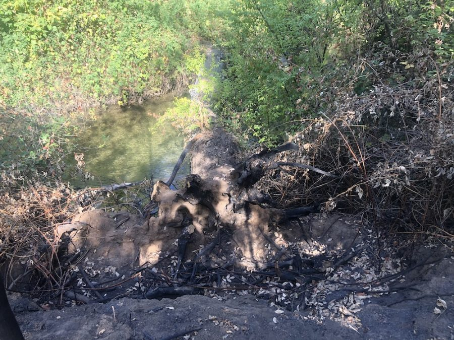 The fire reached near the creek on Tuesday morning. Photo credit: Ricardo Tovar