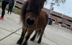 Animal petting helps de-stress students