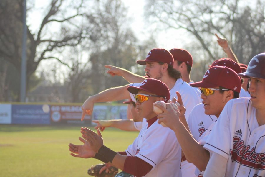 The+Chico+State+baseball+team+celebrating+a+run+being+scored+in+the+2020+season.+Photo+credit%3AJulian+Mendoza