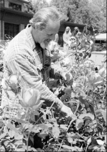 Photograph courtesy of Chico State Gary Shields, the lead groundsworker, trims the roses in the George Petersen Rose Garden in the spring of 1999.