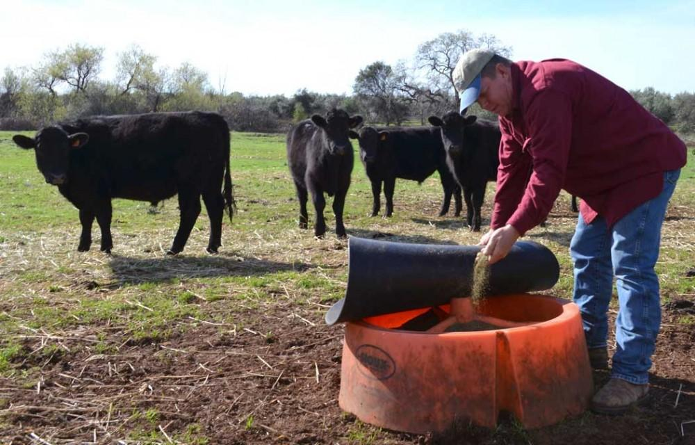 Kurt Albrecht, co-owner of Chaffin Family Orchards, inspects a dietary mineral supplement used by his herd. This group of about 40 Angus cattle will have to be moved to another side of the property soon to prevent overgrazing.Photo credit: Nicholas Carr