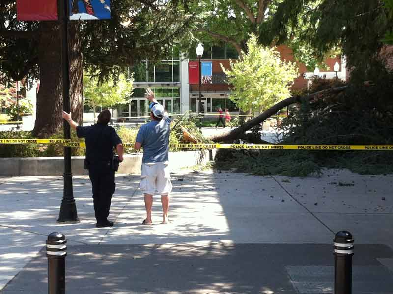 A massive branch fell April 19 next to Meriam Library. Photo credit: Eric Mccauley