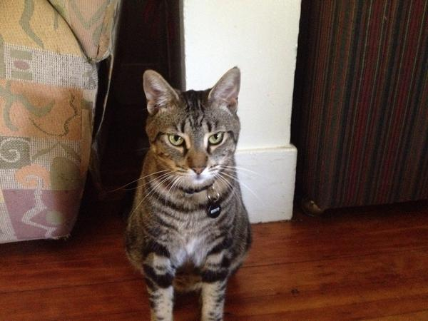 Hooch the cat poses in his home. Photo credit: Michaela Sundholm