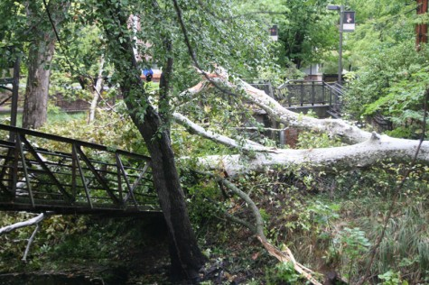 Fallen tree destroys Gus Manolis Bridge