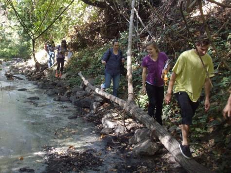 City addresses fire hazard creek plants