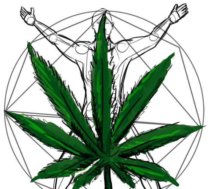 The science of getting high: How weed works in the body