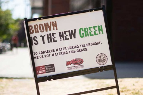 Chico State is making an effort to conserve water by not watering lawns and embracing the dead look. Photo credit: Alicia Brogden