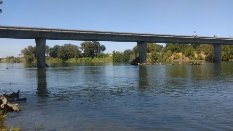 Salmon population in the Sacramento River nearly wiped out by warm water