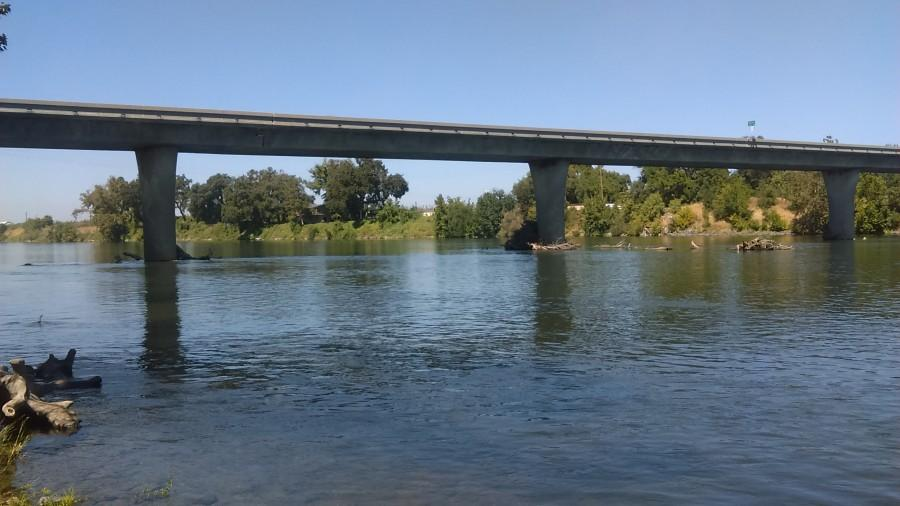 The Sacramento River is home to the Chinook salmon, which have been dying in the heat waves as a result of the drought. Photo credit: Austin Herbaugh