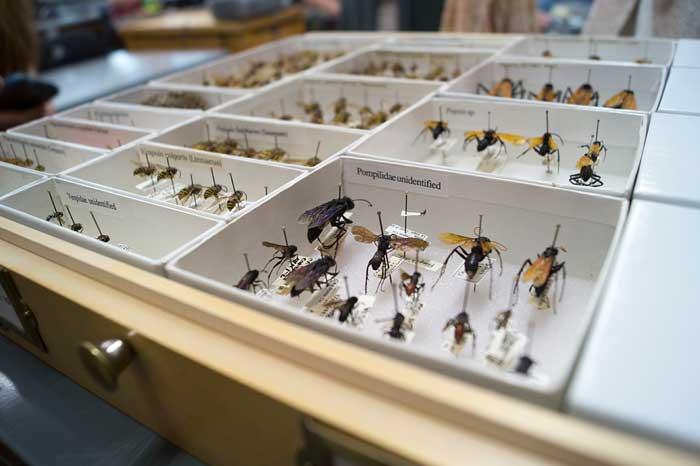 BugsWEB.jpg