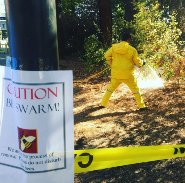 Pest control sprays bees outside of Plumas. Photo credit: Miles Huffman