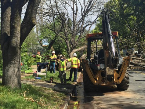 Fallen tree ruptures pipeline