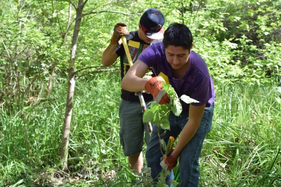 Antonio Robles works hard to remove weeds from the area.