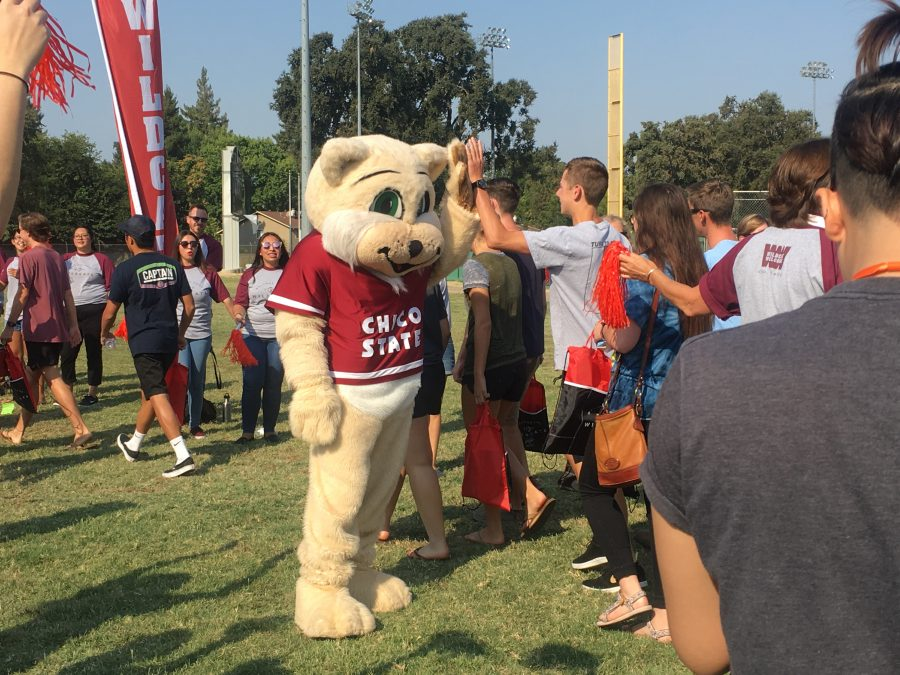 Chico State's mascot high fives freshmen on their way to take the annual