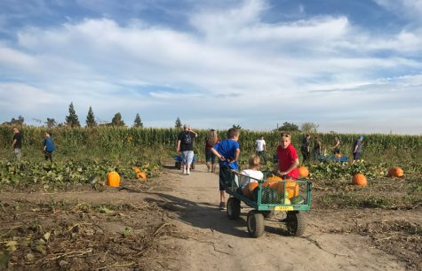 Picking the Choice Country Pumpkin