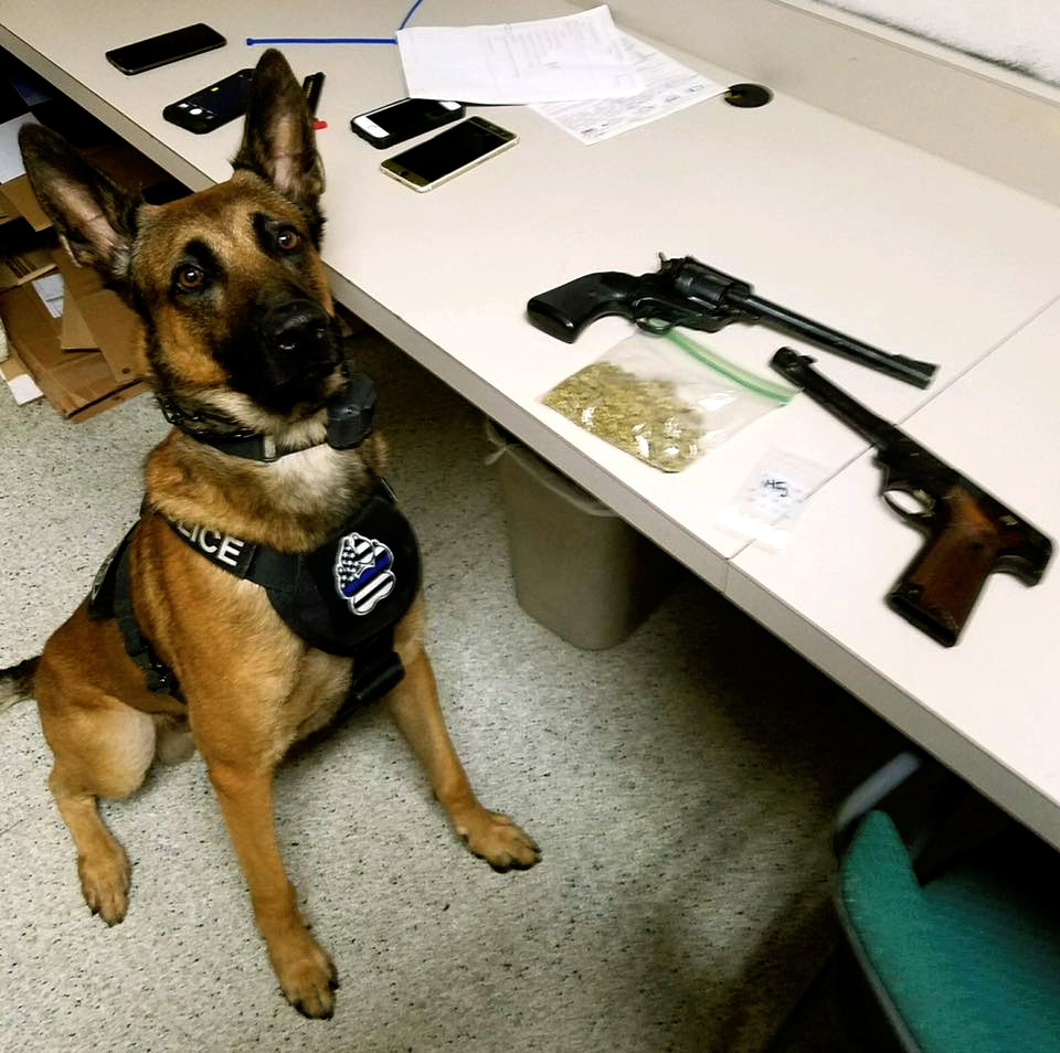 Chico K-9 assists in drug and weapons bust