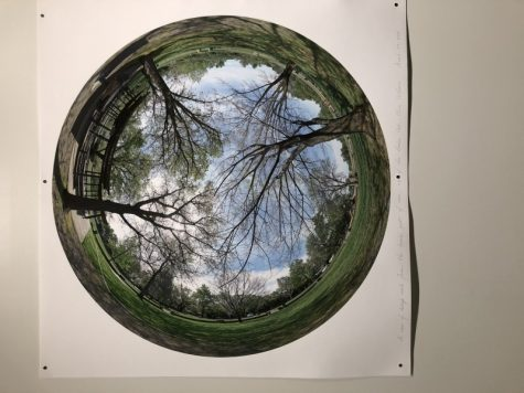 What the Hooker Oak tree would see if it was still standing today. Photo credit: Jessica Carvajal Castillo