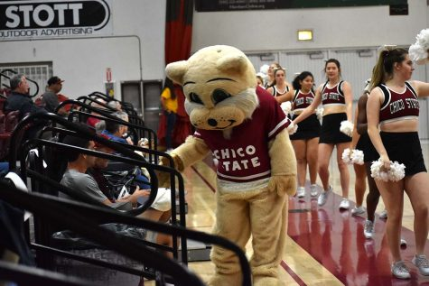 Willie the Wildcat greets fans at the February 17 woman's basketball game. Photo credit: Martin Chang