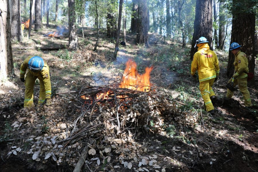 California Conservations Corps members burned vegetation on Doe Mill Road near Butte Creek. Image courtesy of Rick Carhart, Information Officer for CAL Fire.