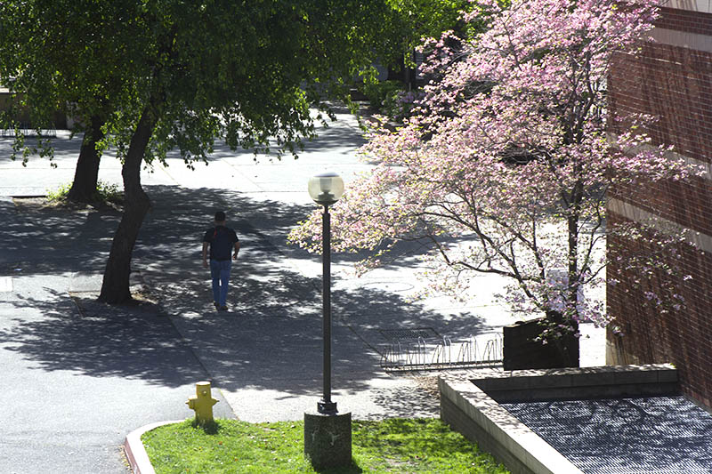 After two days of rainy weather, a student enjoys the shade during a sunny day on April 8. Photo credit: Martin Chang