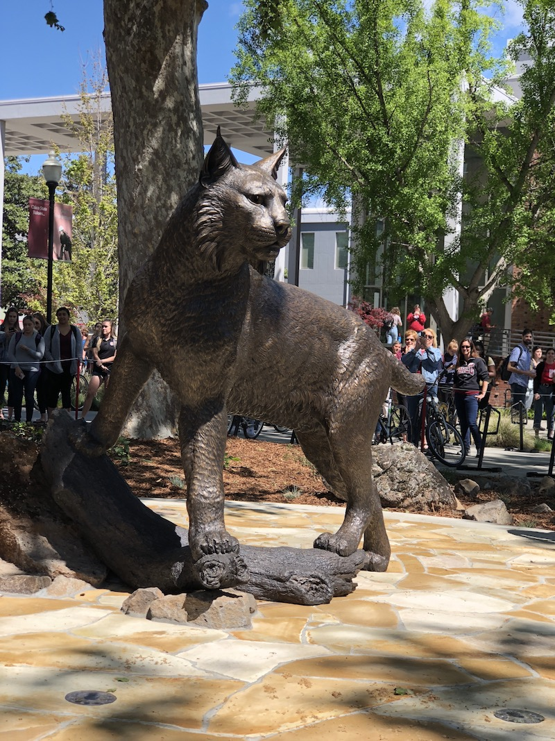 Chico State's new wildcat statue located in front of the BMU. Photo credit: Alejandra Fraga