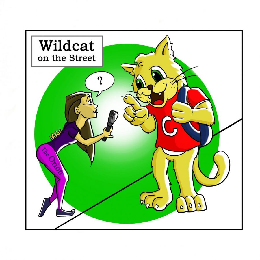 Wildcat-on-the-street