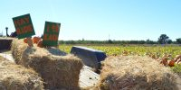Chico High Future Farmers Of America pumpkin patch returns after five years