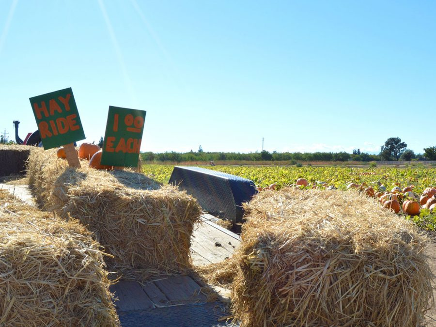 Hayrides are offered for a drive around the pumpkin patch. Photo credit: Olyvia Simpson