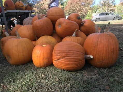 Plump pumpkins from the harvest festival Photo credit: Justin Jackson