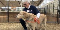 Volunteers seek to reunify Camp Fire animals with owners