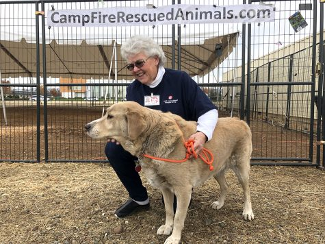 Jan Reale, North Valley Animal Disaster Group volunteer since 2008, with Pericles, one of the sheltered dogs being cared for at the shelter by the Chico Airport. Photo credit: Olyvia Simpson