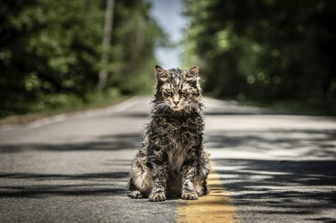 Church, the Creed family cat, is one the main antagonists of the film.  IMDb website photo