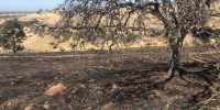 Fire on Neal Road burns four acres