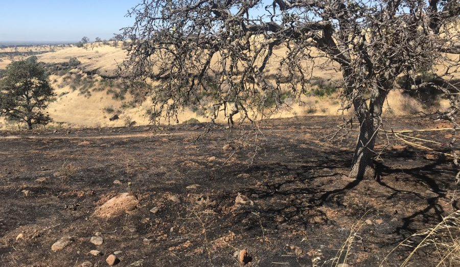 The fire burned a total of four acres, leaving burnt remains of the vegetation. Photo credit: Jessie Imhoff
