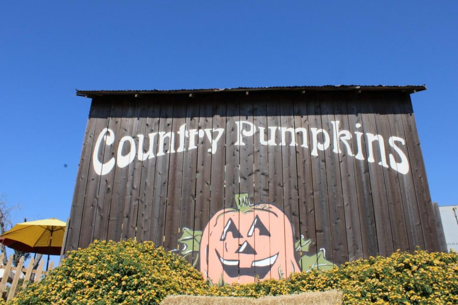 Country Pumpkins offers family-friendly fun in daylight