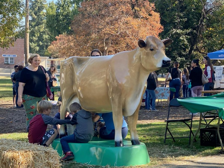 Children can get an experience of milking a fake cow. Photo credit: Hana Beaty