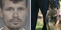Pick and pull burglar identified as night prowler